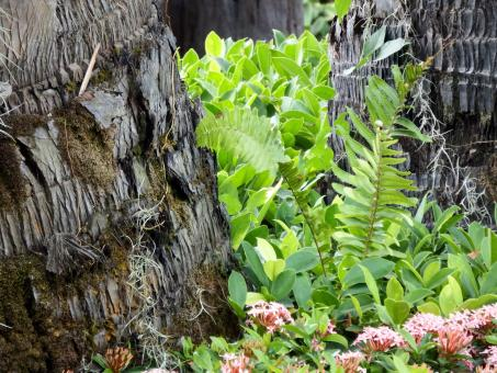 Free Stock Photo of Garden on Tree Bark