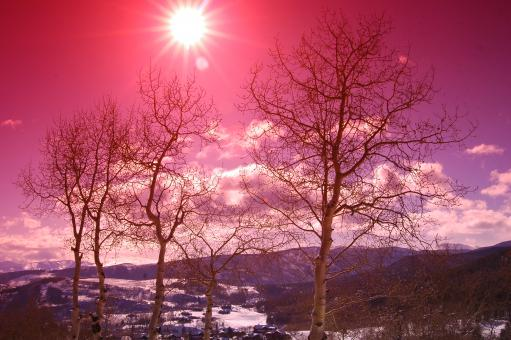 Free Stock Photo of Aspen Trees in the Snowy Sunset