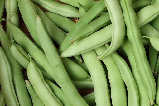 Free Stock Photo of Close-up of freshly picked beans