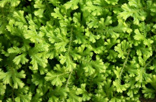 Free Stock Photo of Close-up of small green leaves