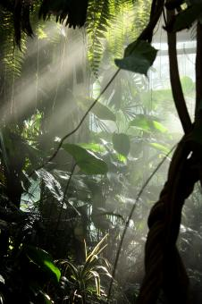 Free Stock Photo of Sunlight shining through mist and tropic