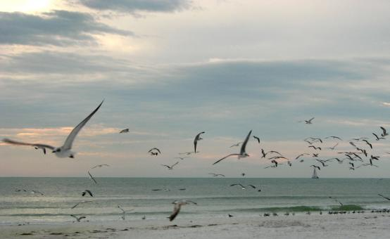 Free Stock Photo of Seagulls flying over the beach at sunset