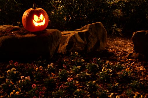 Free Stock Photo of A Halloween jack-o-lantern on a rock