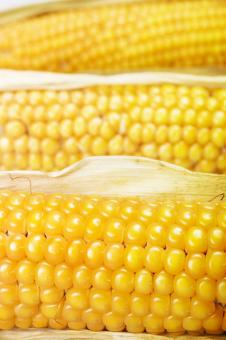 Free Stock Photo of corn