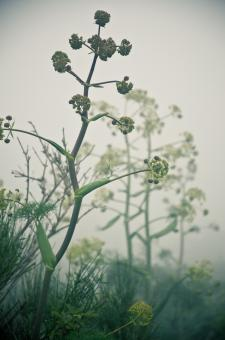 Free Stock Photo of Plants in the mist