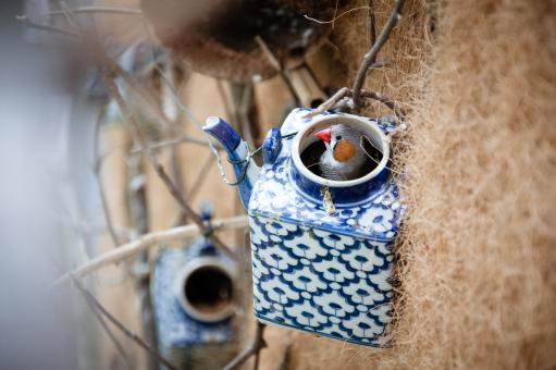 Free Stock Photo of  little bird on birdhouse teapot