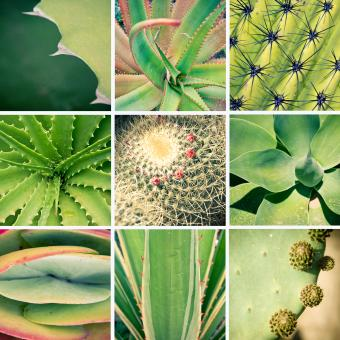 Free Stock Photo of Cactus and plants collage