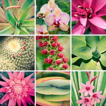 Free Stock Photo of Pink Fower and Plant Collage