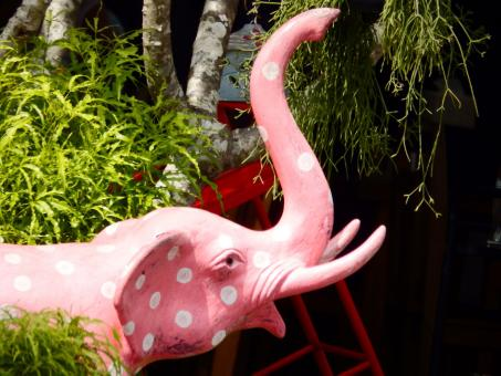 Free Stock Photo of Pink Elephant