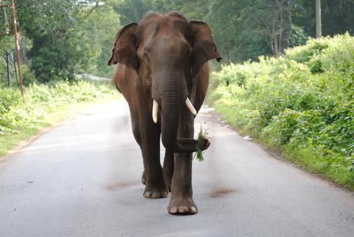 Free Stock Photo of Beautiful Giant Elephant on the Road
