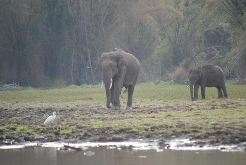 Free Stock Photo of Elephants in Buxa