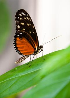 Free Stock Photo of Butterfly in nature