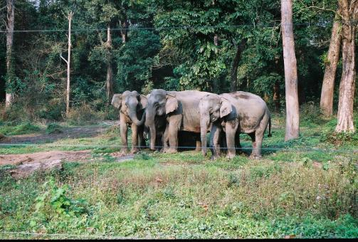 Free Stock Photo of Herd of elephant in Buxa Tiger Reserved