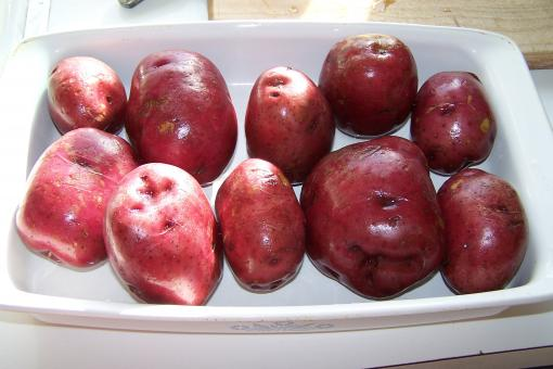 Free Stock Photo of Red Potatoes