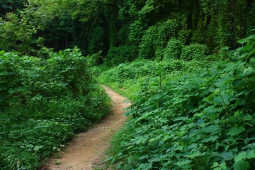 Free Stock Photo of A dirt path through an overgrown forest