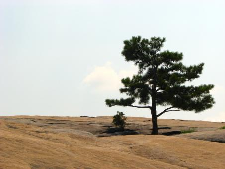 Free Stock Photo of Single tree at the top of Stone Mountain