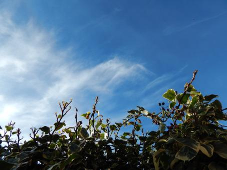 Free Stock Photo of Ivy against the sky