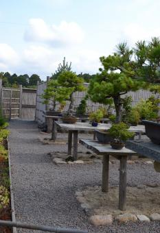 Free Stock Photo of Bonsai garden