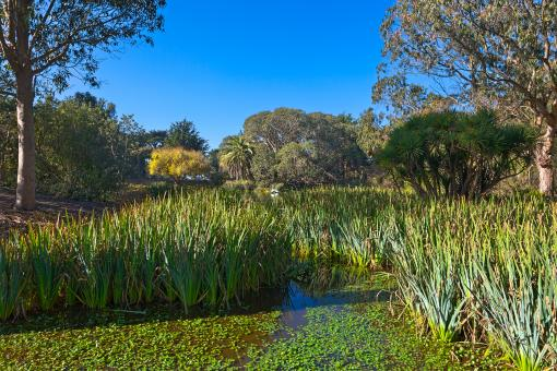 Free Stock Photo of Zoo Marsh Scenery - HDR