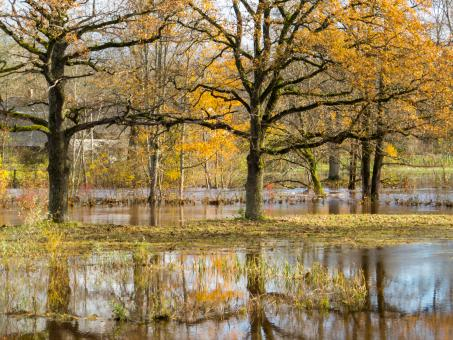 Free Stock Photo of Fall and too much rain. A little floods