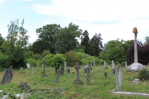 Free Stock Photo of Overgrown Cemetery