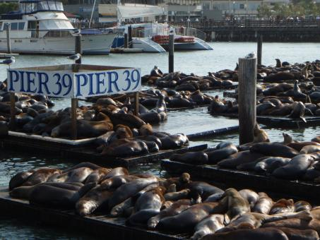 Free Stock Photo of Pier 39