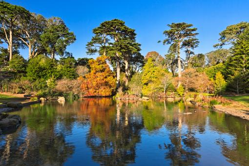Free Stock Photo of Botanical Gardens Pondscape - HDR