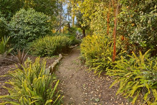 Free Stock Photo of Botanical Gardens Trail - HDR
