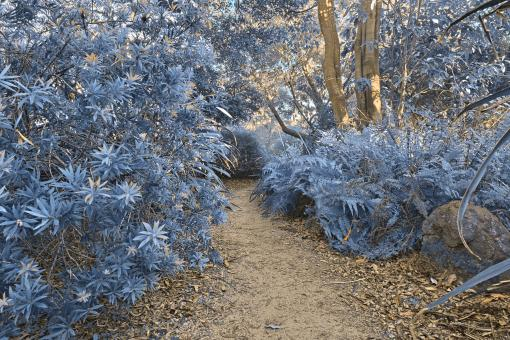 Free Stock Photo of Botanical Gardens Trail - Winter Blue HD