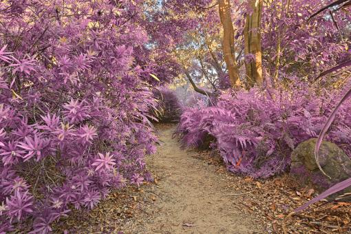 Free Stock Photo of Botanical Gardens Trail - Ultra Violet H