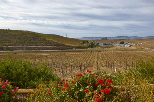 Free Stock Photo of Sonoma Valley Scenery - HDR