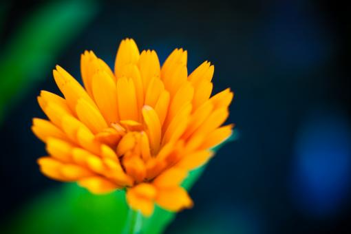 Free Stock Photo of Bright Yellow Flower