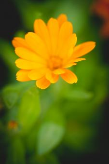 Free Stock Photo of Beautiful Yellow Flower