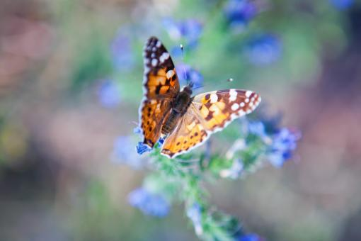 Free Stock Photo of Butterfly on the flower