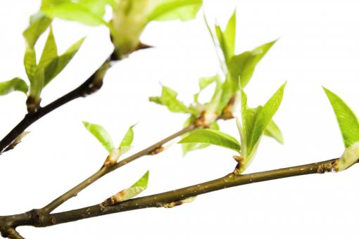 Free Stock Photo of green branch
