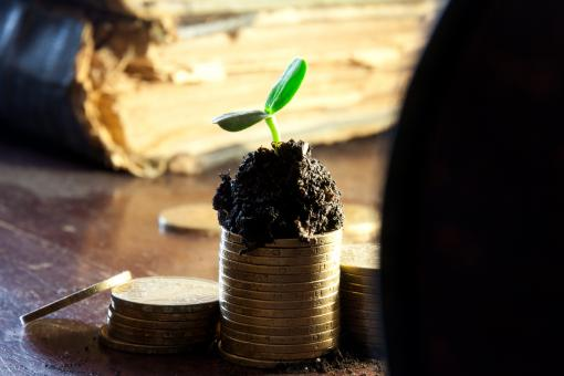 Free Stock Photo of Money growth concept