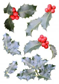 Free Stock Photo of Christmas holly cutouts