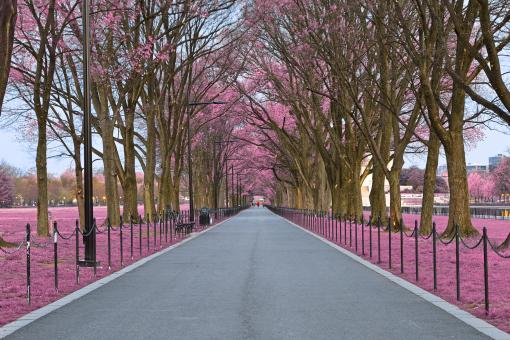 Free Stock Photo of National Mall Promenade - Pink HDR