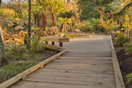 Free Stock Photo of Botanical Gardens Boardwalk - HDR