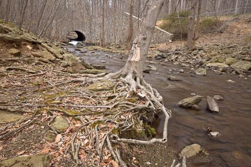 Free Stock Photo of Cunningham Forest Stream - HDR