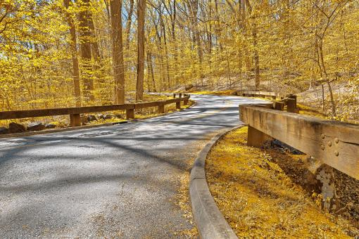 Free Stock Photo of Gold Forest Road - HDR