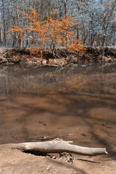 Free Stock Photo of Rock Creek Stream & Foliage - Blue & Ora