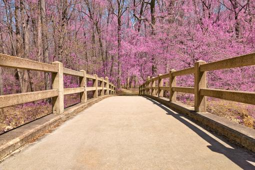 Free Stock Photo of Bridge to Pink Paradise - HDR