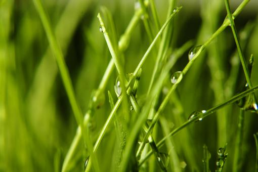 Free Stock Photo of Wet grass