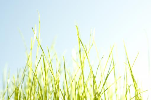 Free Stock Photo of Spring grass