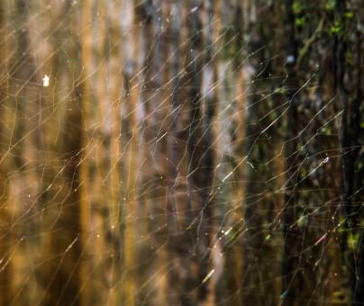 Free Stock Photo of Spider web art