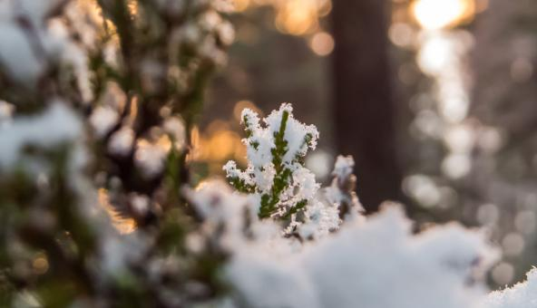 Free Stock Photo of Snowy Forest
