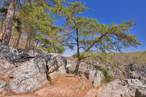 Free Stock Photo of Great Falls Rocks & Foliage