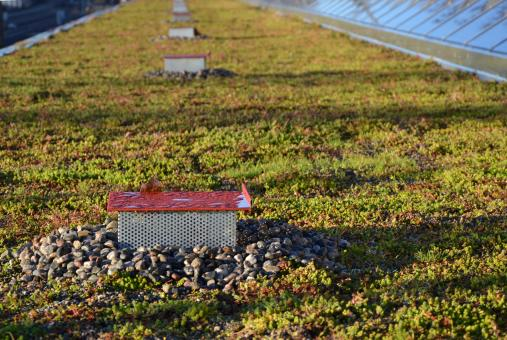 Free Stock Photo of Flat green roof
