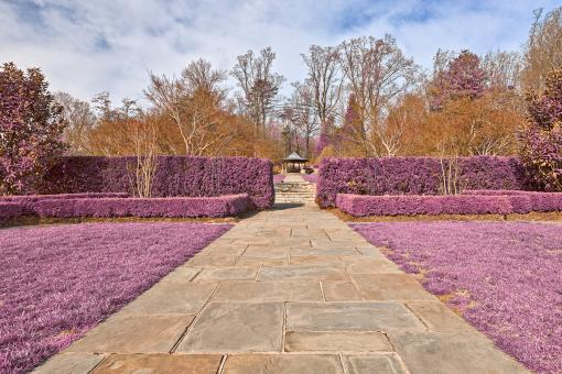Free Stock Photo of Brookside Gardens Path - Ultra Violet HD
